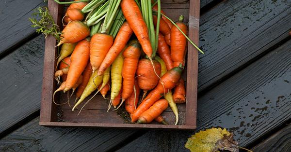 verduras de raíz 3